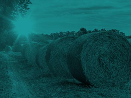 hay feeders category